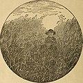 Canadischer familien Calender fuer das Jahr 1892 (1892) (14597276030).jpg