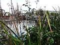 Canalside Plants - geograph.org.uk - 1028105.jpg