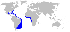 a world map with blue outlines along the eastern coast of the Americas from New England to a large patch off Argentina, and along the western coast of Africa from Senegal to Namibia