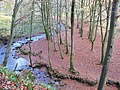 Carpet of leaves - geograph.org.uk - 278866.jpg