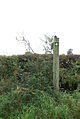 Carved signpost on Lois Farm - geograph.org.uk - 578110.jpg