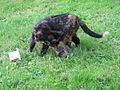 Cat and hedgehog.JPG