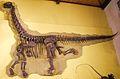 Cathetosaurus skeleton 1.jpg