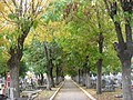 Cementerio municipal FV (5).jpg