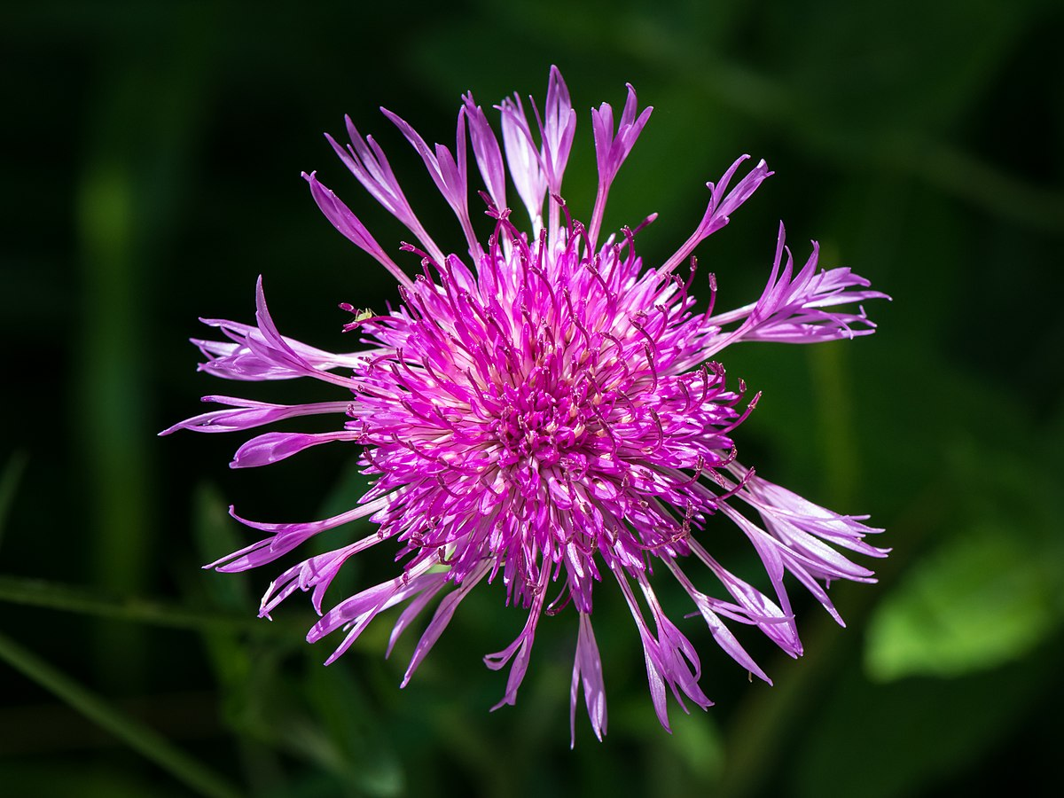 Image Result For List Of Flowers