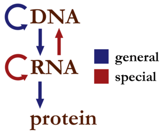 Central dogma of molecular biology Explanation of the flow of genetic information within a biological system