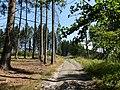 Cesta lesom - panoramio.jpg