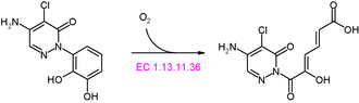 Chloridazon-catechol dioxygenase - Image: Chloridazon catechol dioxygenase reaction