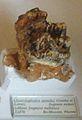 Choerolophodon pentelici.jpg