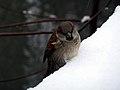 Christmas @ Central Park (11655240946).jpg