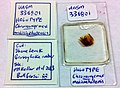 Chronomyrmex medicinehatensis UASM336801 specimen tag and amber.jpg