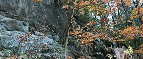 Cliff face off of the Henry Buck Trail in American Legion State Forest.jpg