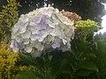 Cluster Flower.jpg