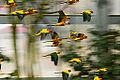 Colorful flight (6838387723).jpg