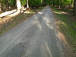 Compacted forest track no1.jpg
