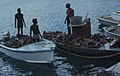 Conch boats. Dozens in full every day. Nassau (24005038257).jpg