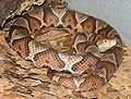 Copperhead 001.jpg