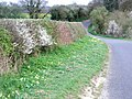 Country lane in springtime. - geograph.org.uk - 396135.jpg