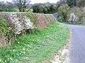 Country lane in springtime. - geograph.org.uk - 396135.jpg