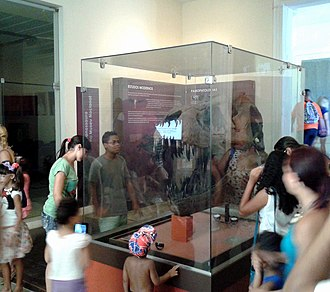 Collection of fossils in the National Museum of Brazil - Exhibition of a Tyrannosaurus rex skull in the museum