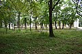 DSC Участок парка в районе Верхних Николаевских ванн.jpg