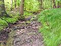 Das Seifersdorfer Gründel bei Seifersdorf7Dippoldiswalde.JPG