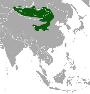 Daurian pika - Image: Daurian Pika area