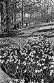 De bollenvelden in bloei, de bloemen in bloei op de Keukenhof, Bestanddeelnr 917-6472.jpg