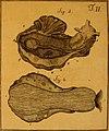 De quibusdam animalibus marinis, eorumque proprietatibus, orbi litterario vel nondum vel minus notis, liber - cum nonnullis tabulis aeri incisis, ab auctore super vivis animalibus delineatis (1761) (20867294751).jpg
