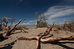Death valley dead trees.jpg