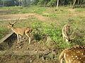 Deer Park at Kinnerasani Dam, Khammam, Telangana State 03.JPG