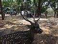 Deer view.jpg