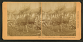 Deere & Co. exhibit, Columbian Exposition. (Showing deer pulling farm implements), by Kilburn, B. W. (Benjamin West), 1827-1909.png
