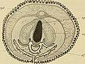 Denkschriften der Medicinisch-Naturwissenschaftlichen Gesellschaft zu Jena (1909) (20664488610).jpg