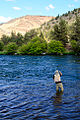 Deschutes River Fly Fishing (Jefferson County, Oregon scenic images) (jefDB1496).jpg