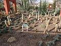 Desert Botanical Garden Phoenix Arizona 48.JPG