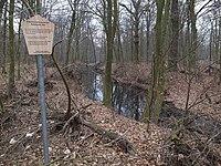 Dessau-Roßlau, Black Lake Natural Monument.jpg