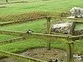 Detail from roman fort of Vindolanda 09.jpg
