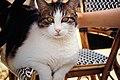 Dia01 Katze.jpg