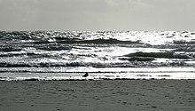 Die Möwe und das Meer IMG 0310a.jpg