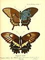 Die ausländischen Schmetterlinge in Abbildungen nach der Natur (Tab. XLVII) (6012000493).jpg