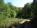 Dirt road in the woods - panoramio (1).jpg