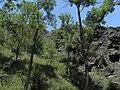 Divoká Šárka - panoramio (39).jpg