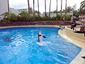 Dolphin Training (7980934558).jpg