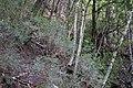Dove Lake Circuit Walking Track, Cradle Mountain - Lake St Clair National Park 54.jpg