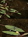 Dragonfly With Detail (3681731058).jpg