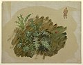 Drawing, Plant studies, 1865 (CH 18200721-2).jpg