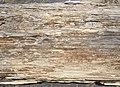 Driftwood Texture (173891133).jpeg