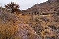 Dripping Springs - Flickr - aspidoscelis (3).jpg