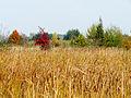 Dubechnya meadows2.JPG